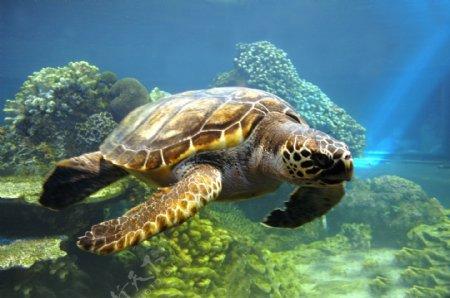 海龟博客背景图片