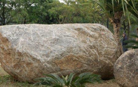 大石头绿树图片