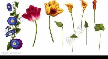 PSD精美花卉素材图片