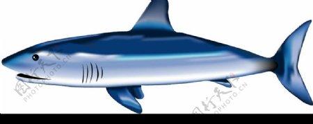 鲨鱼素材图片