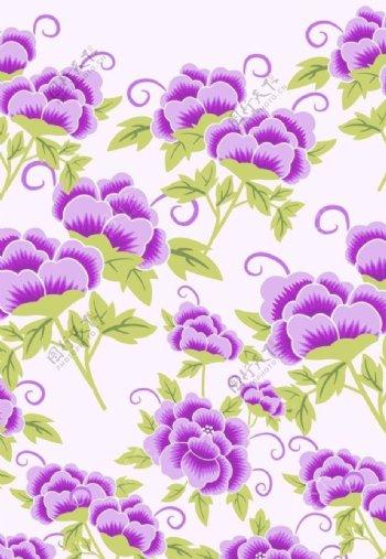 紫色蝴蝶花图片