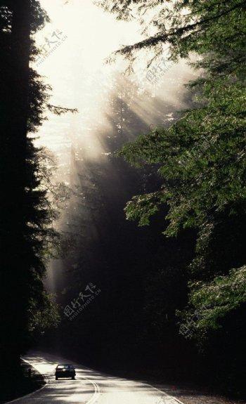 树林中文模版图片