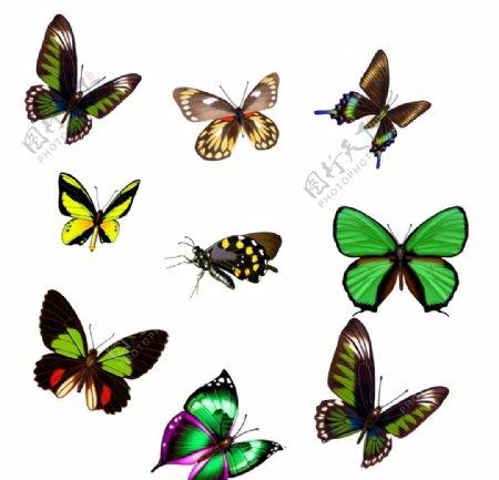 绿色炫丽蝴蝶