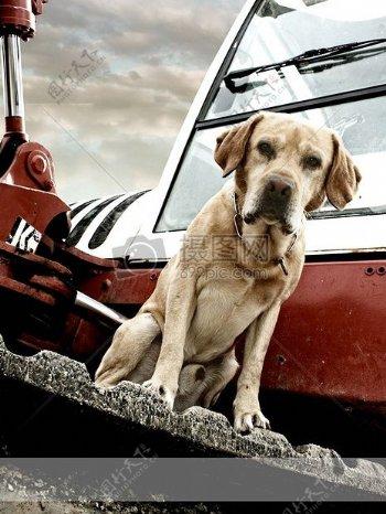 狗男性骄傲动物宠物混合动力甜肖像友好毛皮