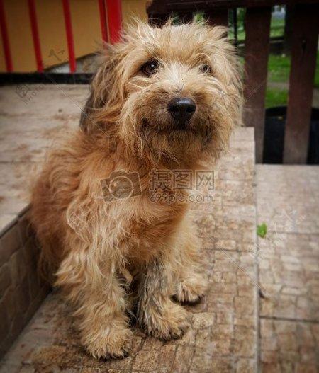 狗犬毛皮大衣法国吐司动物区系动物多毛纵向