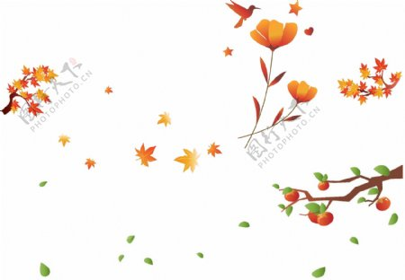 柿子枫叶花朵