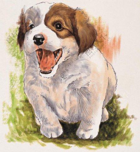 狗家禽家畜动物插图21