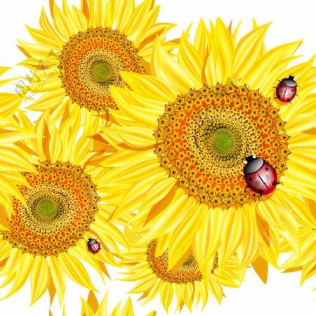 向日葵矢量花卉素材