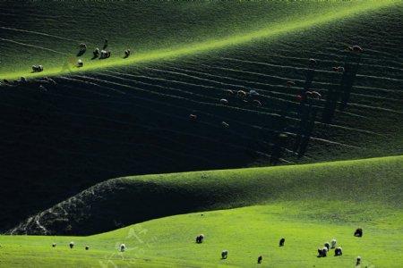 绿色大草原风景图片
