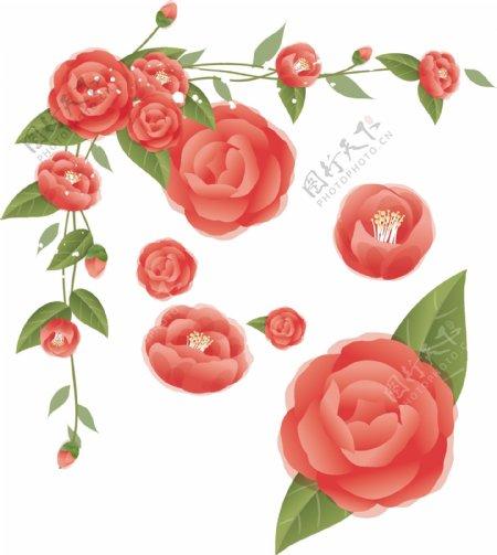 玫瑰花矢量37