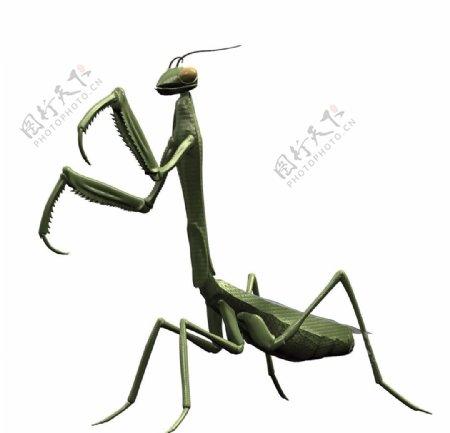 螳螂max模型