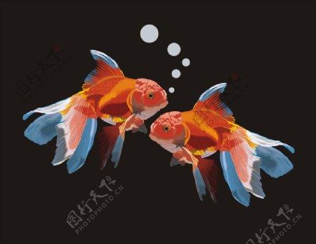 两条金鱼矢量图下载