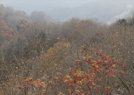 北京八达岭长城的草木