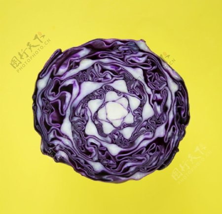 紫色圆白菜的红叶卷心菜