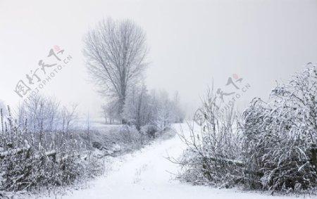 冬天的草木