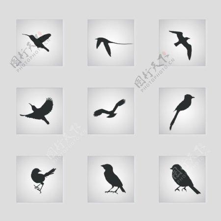 鸟飞翔矢量剪影集合