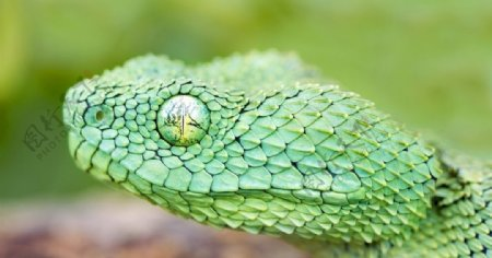 恐怖的毒蛇