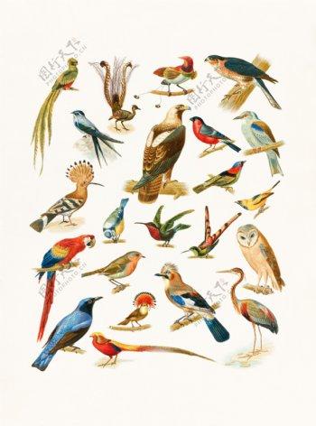 手绘鸟类组合