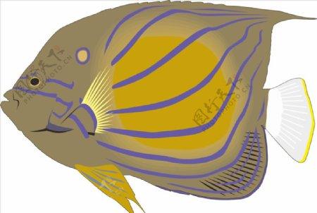 蓝斑鱼海洋鱼矢量手