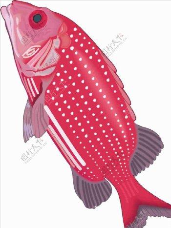 石斑鱼手绘矢量海洋鱼