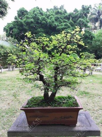 花木盆栽艺术