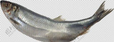 海洋鱼类图谱图片