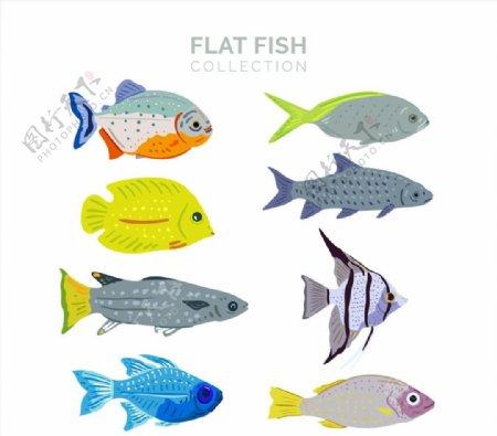 扁平化彩色鱼类图片