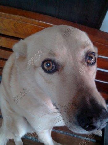 旅途小精灵之狗狗图片