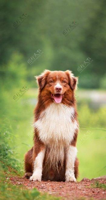 宠物狗狗动物手机高清壁纸图片