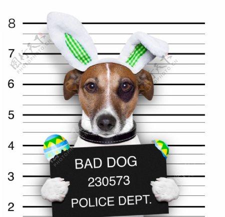 超高清犯罪狗狗图片高清宠物图