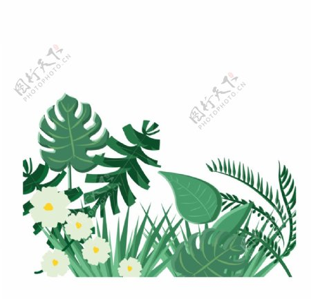 AI格式矢量热带植物图片