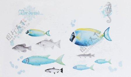 海洋鱼群图片