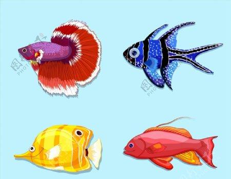 美丽热带鱼矢量图片