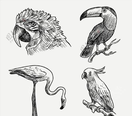 逼真手绘鸟类图片