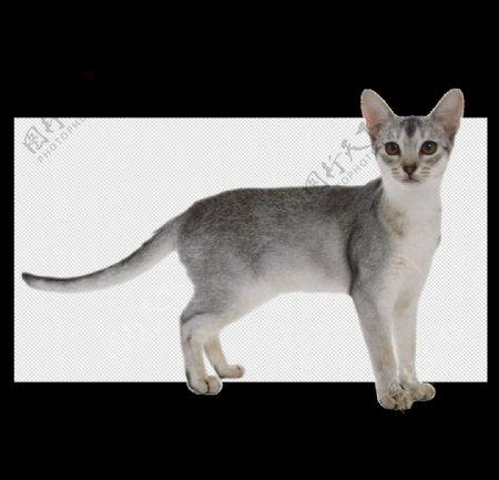 小猫猫图片