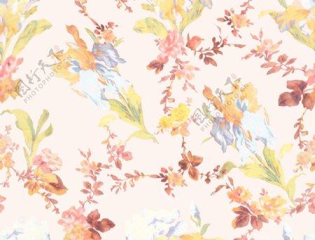 秋天抽象花卉图片