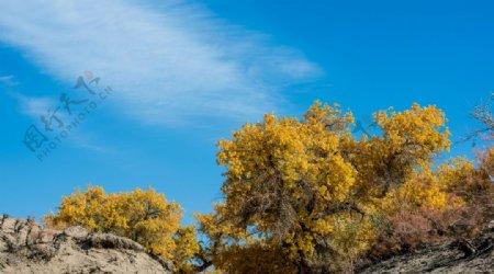 秋季森林枫树背景海报素材图片