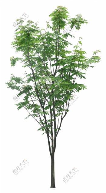 树绿化树小树大树素材图片