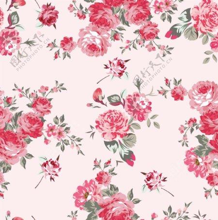 玫瑰花月季花图片