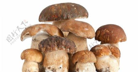 一些蘑菇白色背景图片