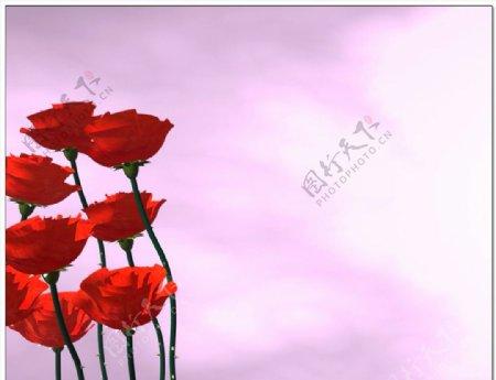 玫瑰花旋转随风摇曳