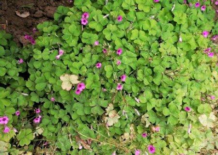 绿色植物绿色花草太阳花图片