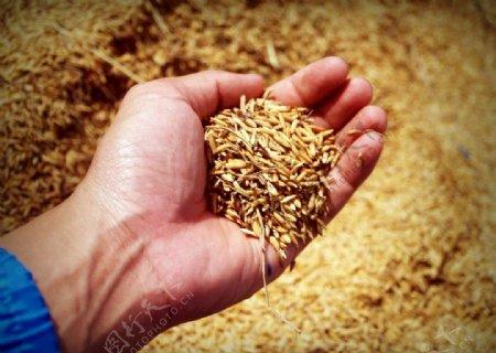 农民农业粮食手图片