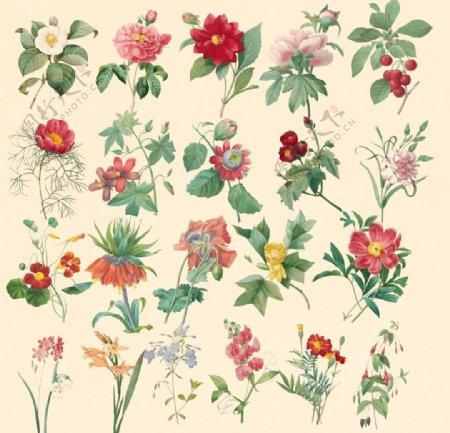 中国风植物花卉怀旧工笔梅花图片