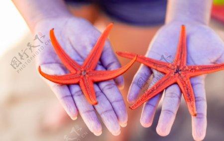 美丽的海星图片
