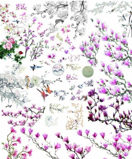 玉兰花素材图片