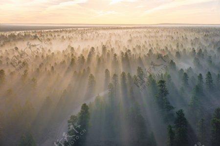 森林日出风景图片