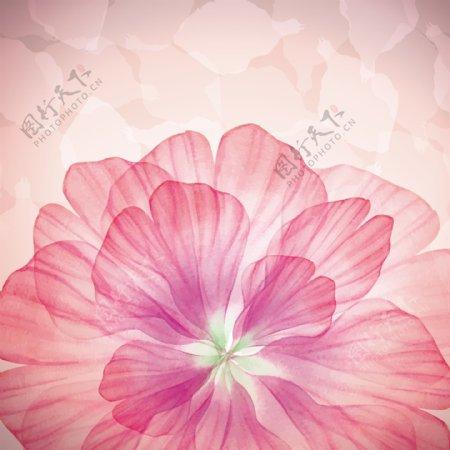 粉色花瓣背景图片