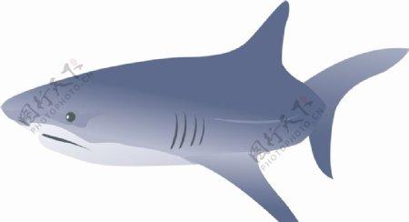 鲨鱼矢量图片