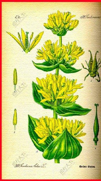 花朵花瓣图片